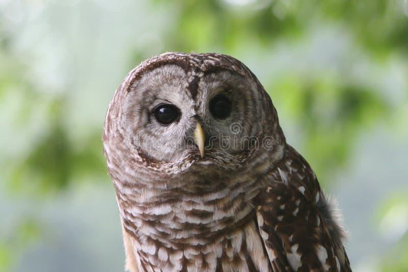 Mijnheer Owl royalty-vrije stock afbeelding