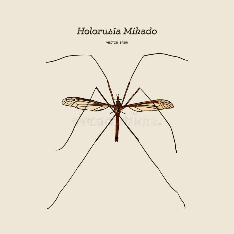 Mikado Holorusia, род самой большой истинной мухы крана вектор эскиза притяжки руки иллюстрация вектора