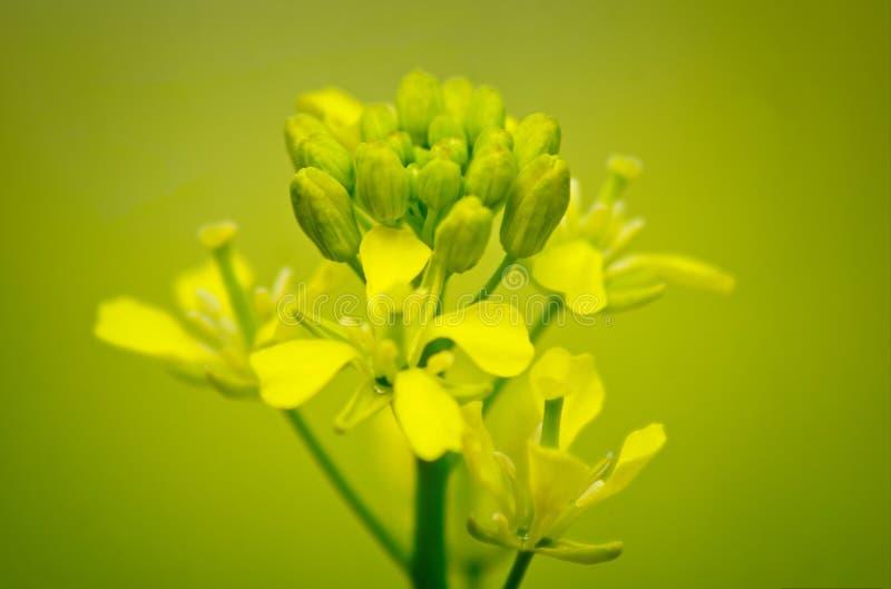 Mikro w kolorze żółtym fotografia stock