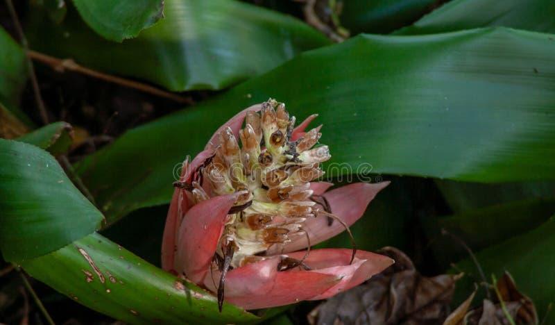 Mikroabschluß oben von einer exotischen Blüte lizenzfreie stockfotografie