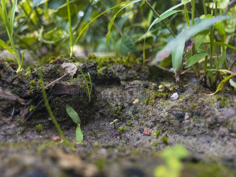 Mikrofokal- fotografi royaltyfri foto