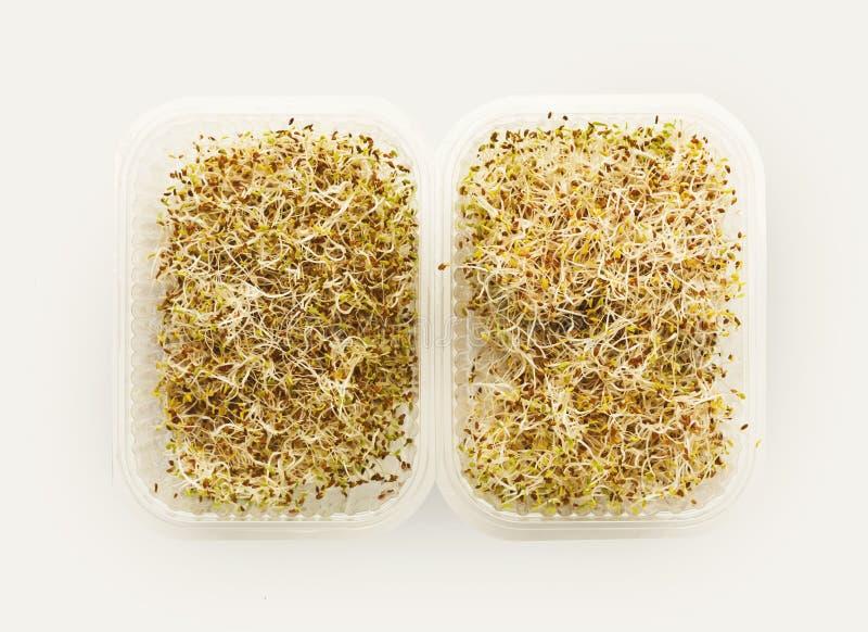 Mikrogräsplaner som växer i den bästa sikten för plast- bunke som isoleras arkivfoto