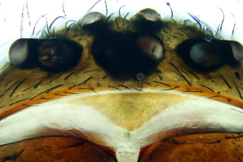 Mikrograph der Tierspinne lizenzfreie stockbilder