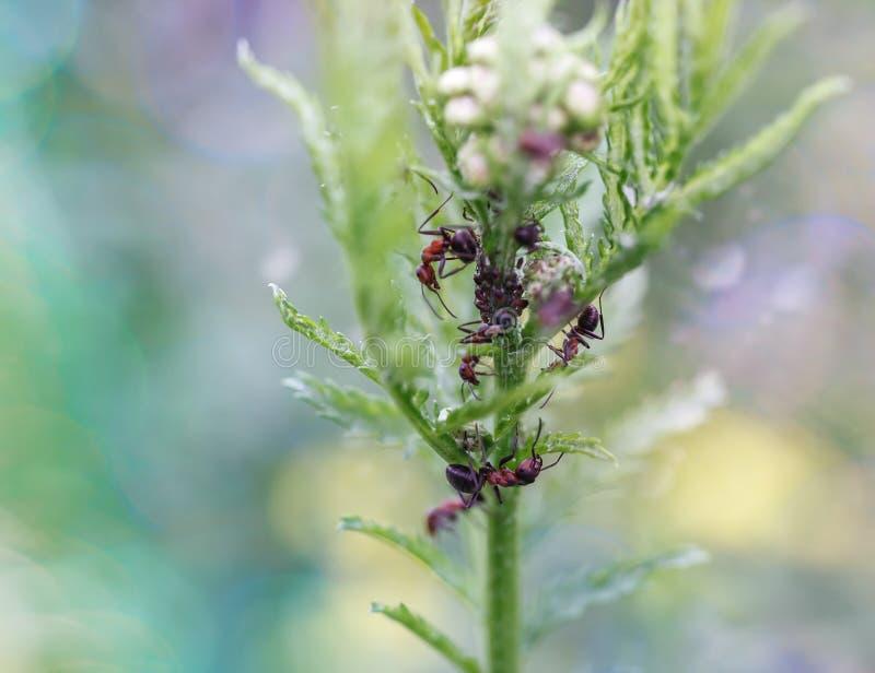 Mikrokosmos insekty obraz stock