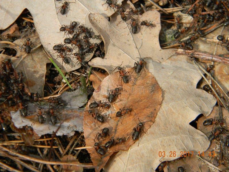 Mikrokosmos mrówki anthill zdjęcie stock