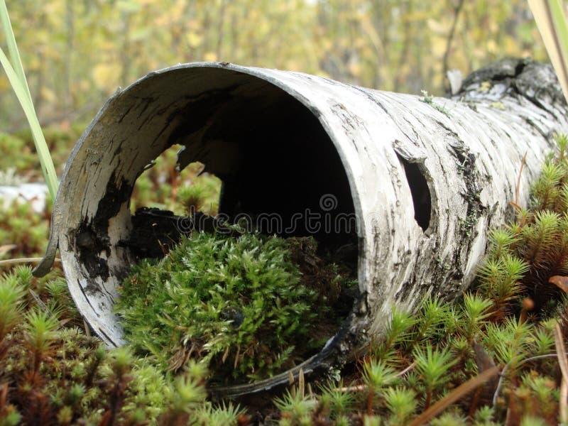 Mikrokosmos w siberian naturze zdjęcia stock