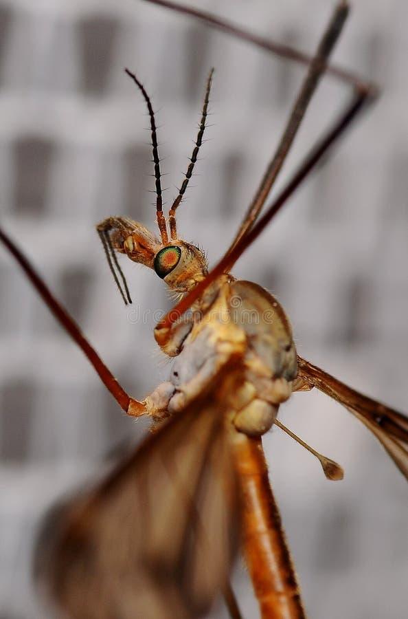 Mikrokosmos wokoło my komarnica obrazy royalty free