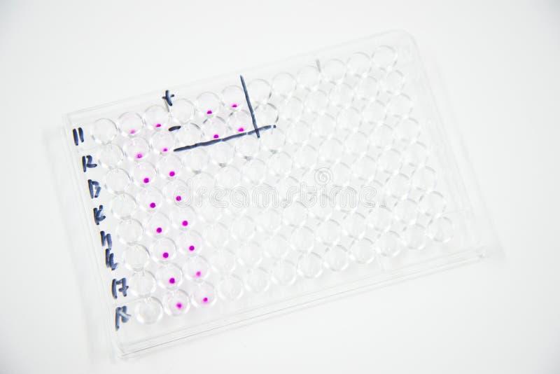 Mikroplatta arkivbild