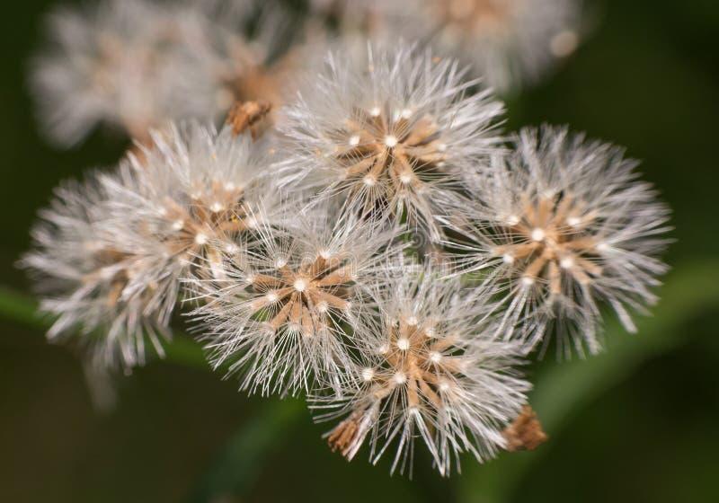 Mikrosamen für das Pflanzen stockbild