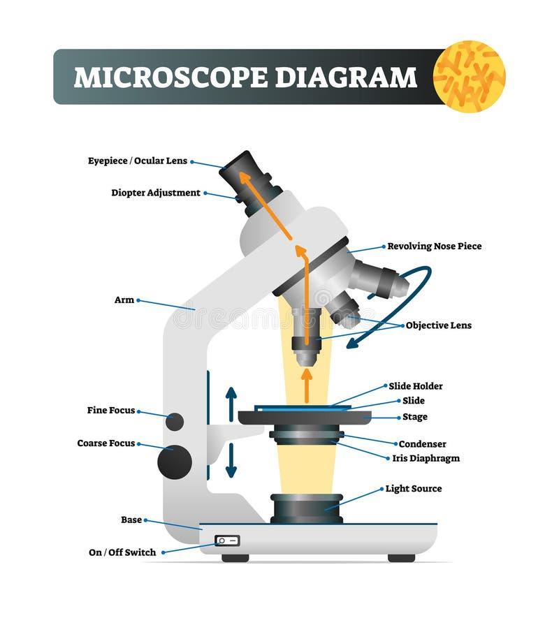 Mikroskopdiagramm-Vektorillustration Beschriftete Instrumentstruktur des lauten Summens lizenzfreie abbildung