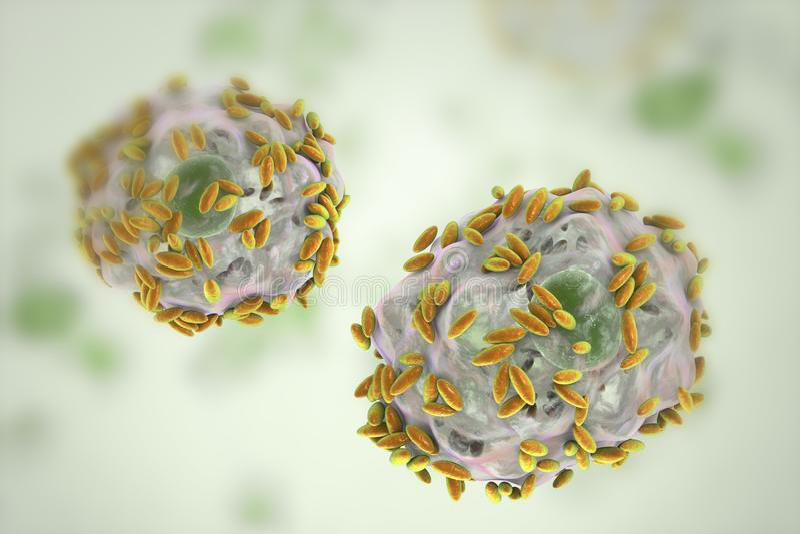 Mikroskopijna diagnoza bakteryjny vaginosis Nabłonkowa komórka, dzwoniąca wskazówki komórka zakrywa z bakteriami Gardnerella ilustracja wektor