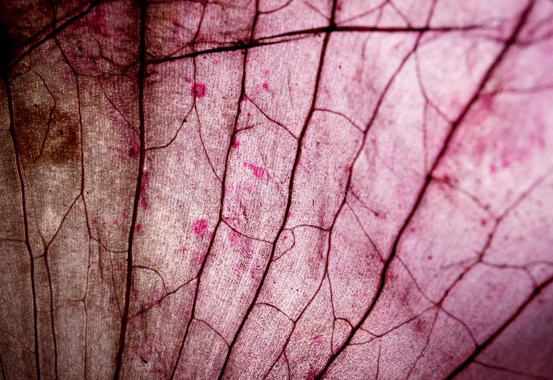Mikroskopiskt prov för silkespapper royaltyfri fotografi