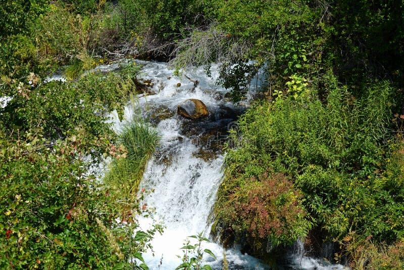 Mil primaveras - Idaho fotografía de archivo