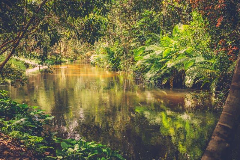 Mil ríos de los lingas Siem Reap camboya fotos de archivo libres de regalías