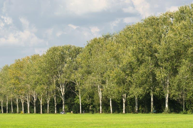 Milaan: weg in het park royalty-vrije stock afbeelding