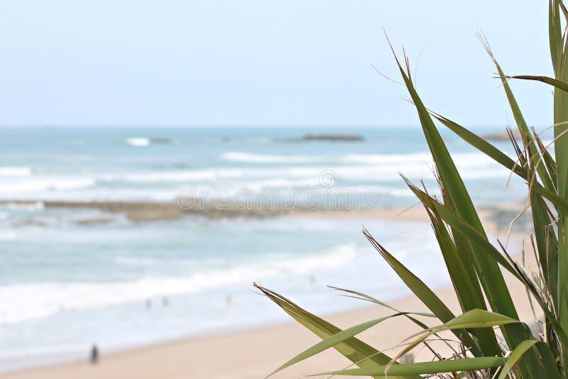 Milady пляжа в Биаррице стоковые изображения