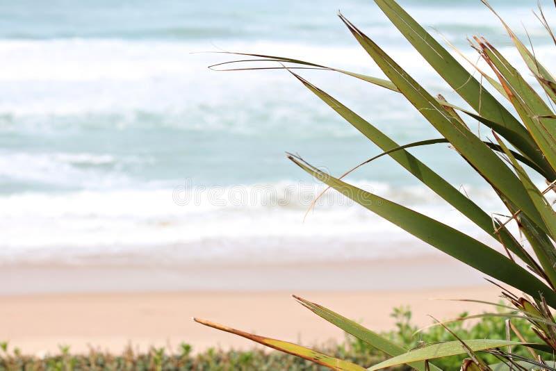 Milady пляжа в Биаррице стоковые фото