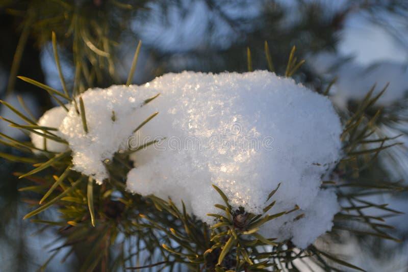 Milagre do inverno da floresta bonita fotografia de stock royalty free
