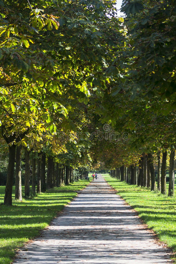 Milan: path in the park. Milan (Lombardy, Italy): path in the park known as Parco Nord, at late summer royalty free stock photos