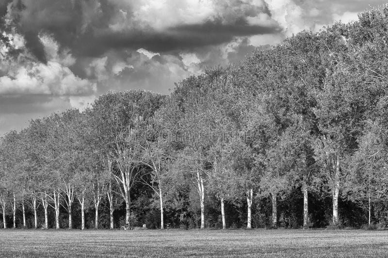 Milan: path in the park. Milan (Lombardy, Italy): the park known as Parco Nord, at late summer. Black and white royalty free stock photo