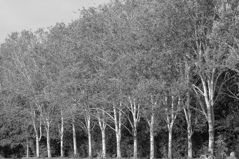 Milan: path in the park. Milan (Lombardy, Italy): the park known as Parco Nord, at late summer. Black and white royalty free stock images
