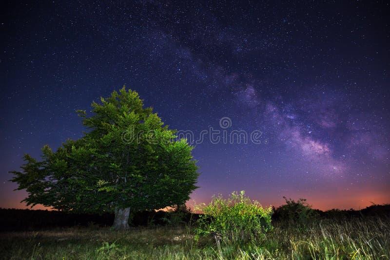 Milchstraße über einem großen Baum stockbild