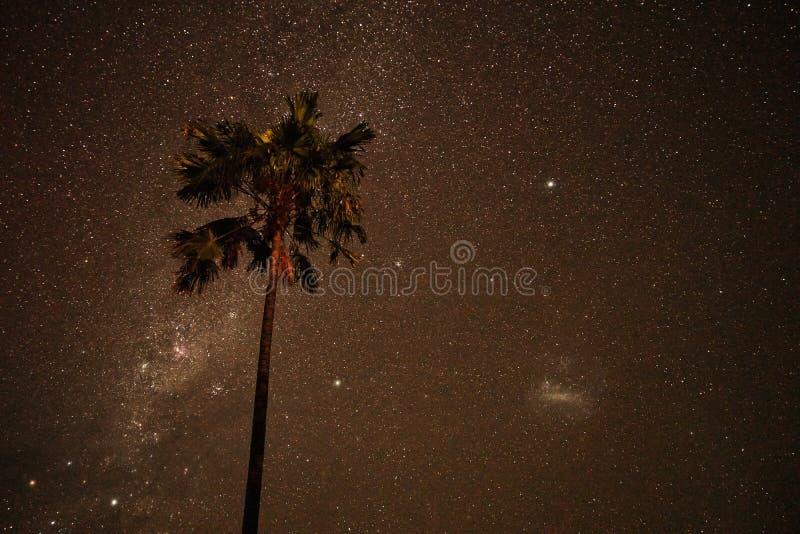 Milchstraße mit einer Palme in Nyepi in Bali lizenzfreie stockfotografie