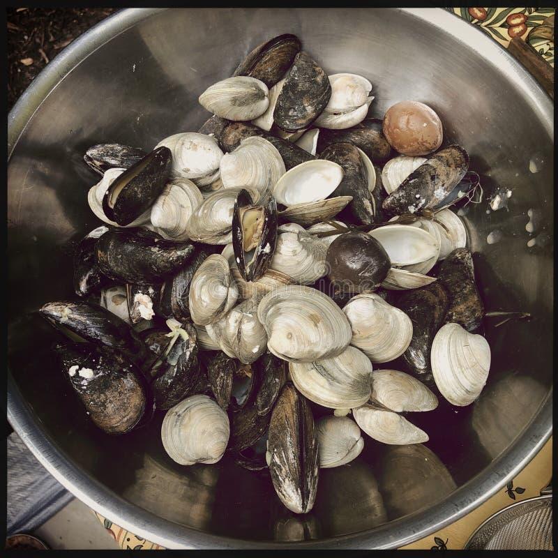 Milczkowie i mussels obraz stock