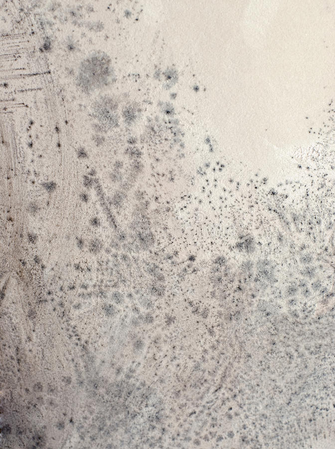 Mildew. Close up on a pattern of mildew mold growing on a wall stock photos