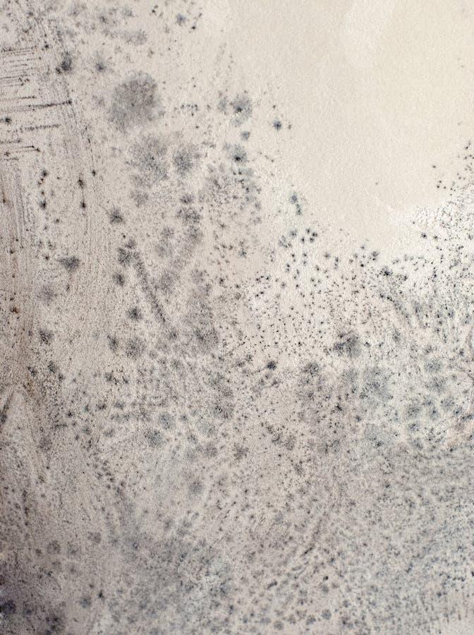 mildew стоковые фото