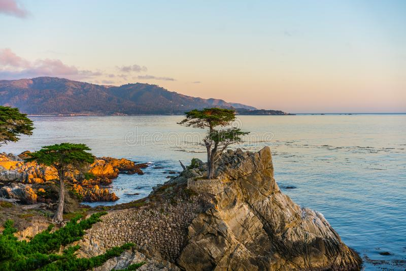 17 mile drive. The Lone Cypress on 17 mile drive on California CA-1 ,shot at sunset stock photos