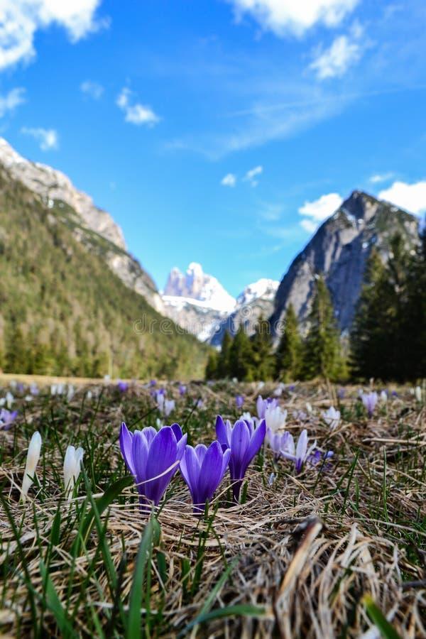 Mile widziany wiosna zdjęcia stock