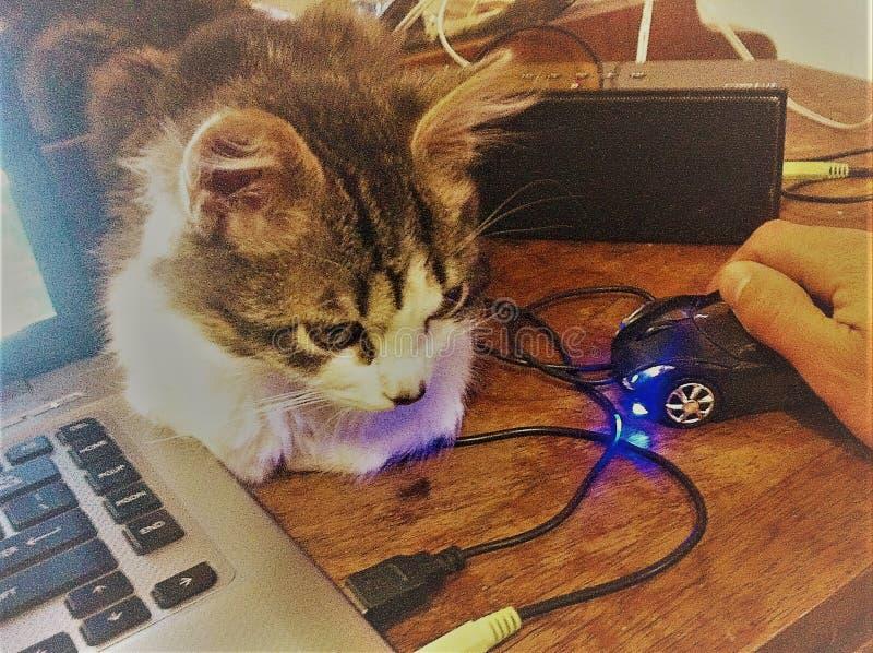 Milenials kot i mysz obraz stock