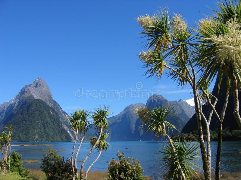Milford Palmtrees royalty-vrije stock fotografie