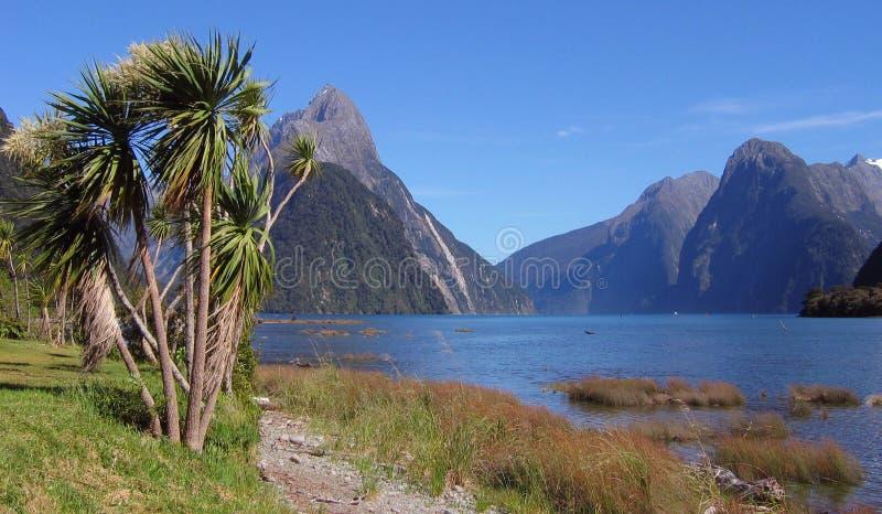 Milford Sound Palmtree foto de stock