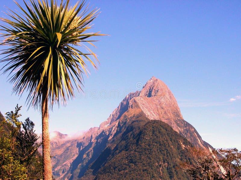 Milford Sound Palmtree photo stock