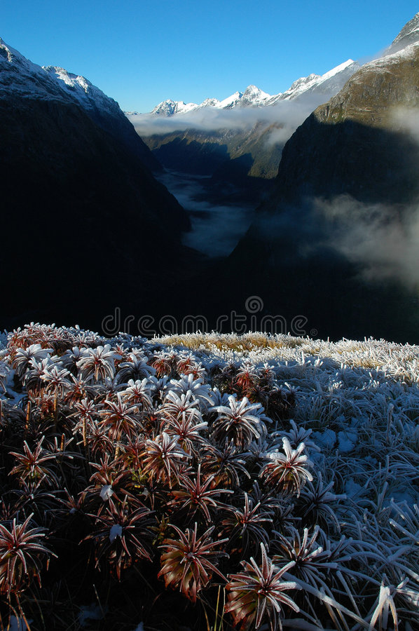 Milford Track Landscape Royalty Free Stock Image