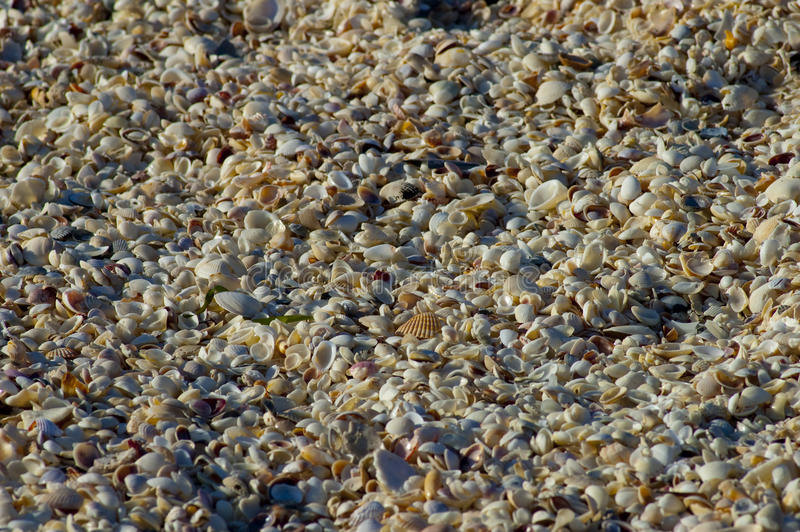 Milhões de shell da praia imagem de stock royalty free