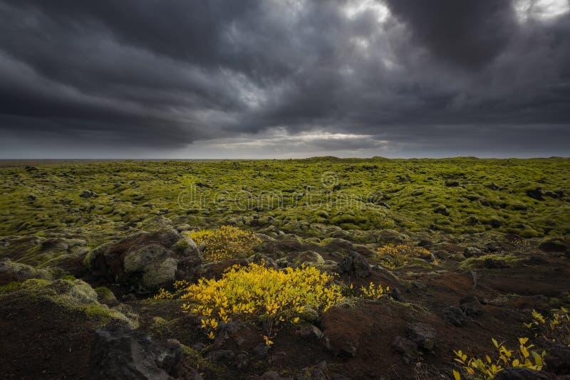 Milhas de Lava Rock Covered no musgo em Islândia imagens de stock