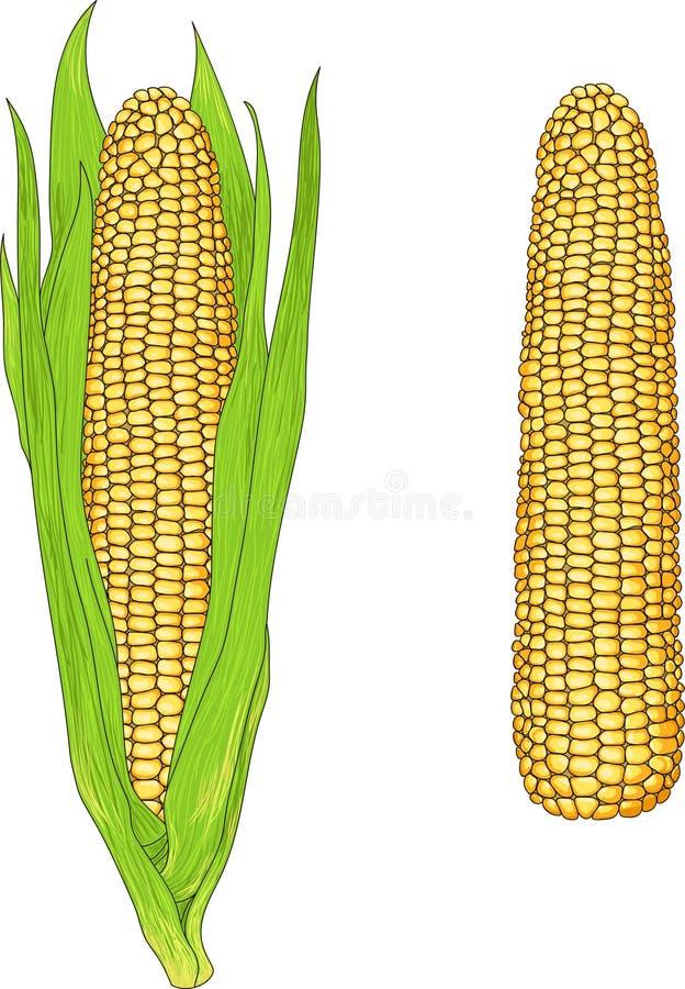 Milho ilustração stock