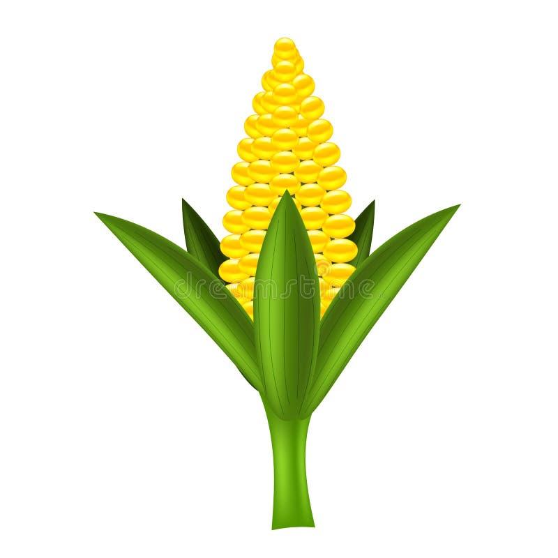 Milho amarelo ilustração do vetor