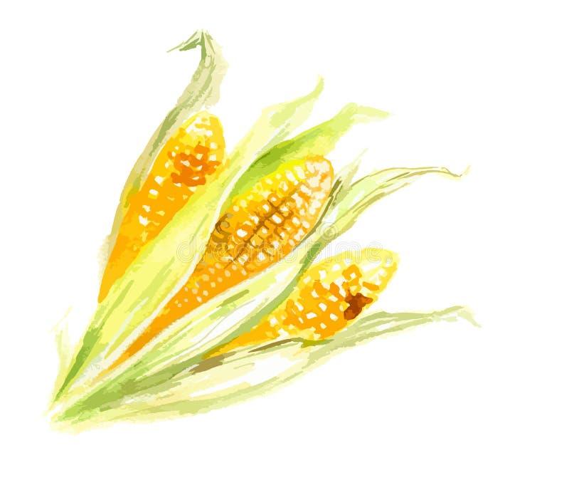 Milho amarelo da aquarela ilustração do vetor