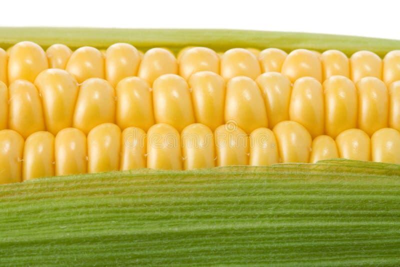 Milho amarelo maduro no branco imagens de stock