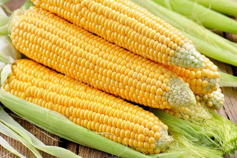Milho amarelo orgânico Fundo Alimento delicioso foto de stock royalty free