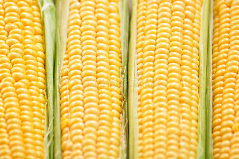 Milho amarelo orgânico Fundo Alimento delicioso imagem de stock royalty free