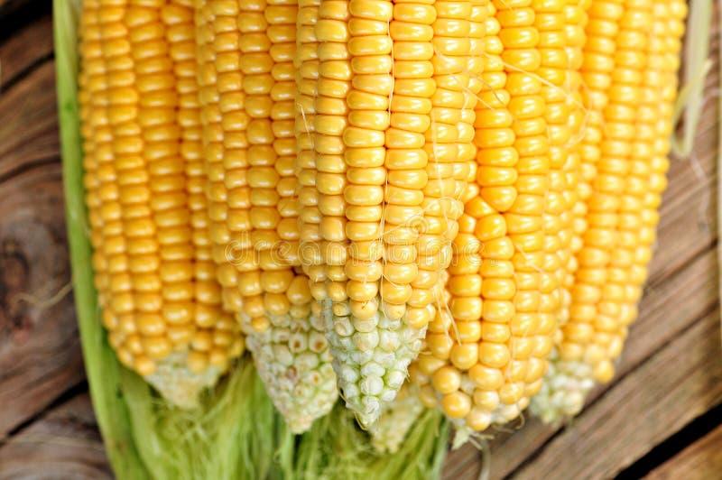 Milho amarelo orgânico Fundo Alimento delicioso imagens de stock royalty free