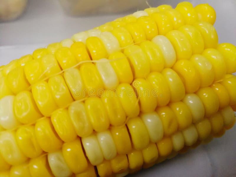 Milho branco amarelo da pérola, milho da pérola foto de stock