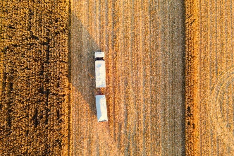 Milho de Arvesting Caminhão com milho em colher o campo foto de stock