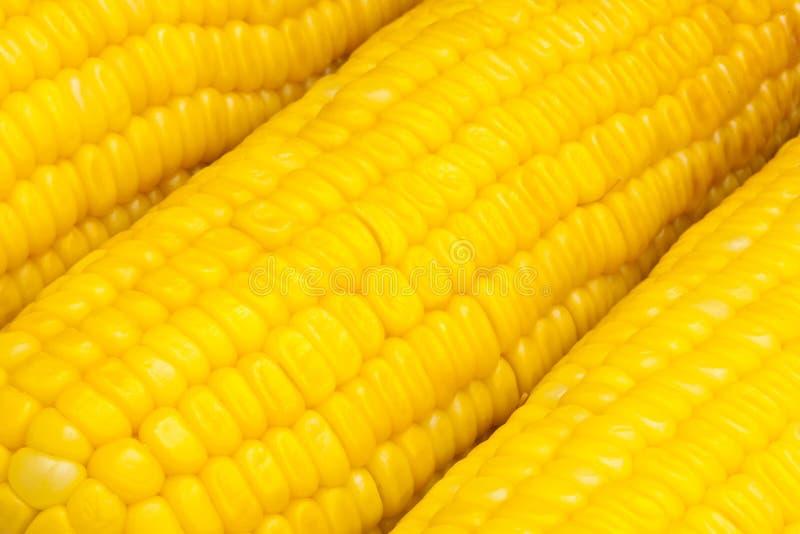 Milho do close up fervido fotografia de stock