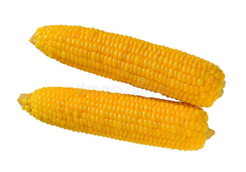 Milho doce isolado Espiga ou milho fervido de milho imagens de stock royalty free